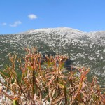 Monte Corrassi (Supramònte, Sardenya)