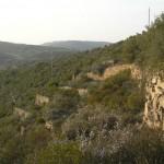 Marges a la vinya del Sabater (Copons, Països Catalans)
