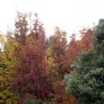 Els boscos del Limbara - Foto de www.montelimbara.com